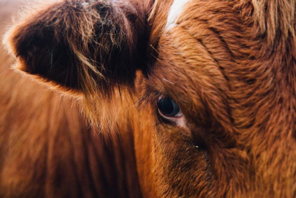 La ganadería es una de las causantes de la situación de emergencia climática actual
