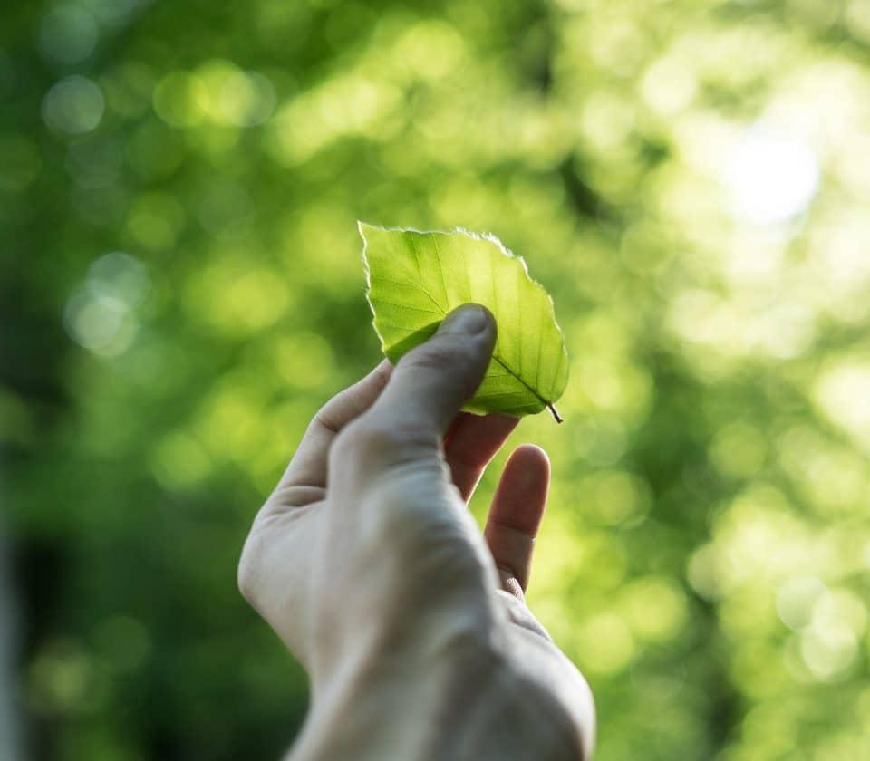 Las empresas serán más sostenibles tras la COVID-19